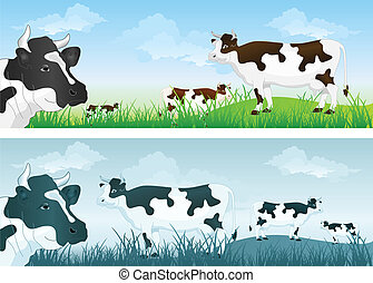 prato, mucca