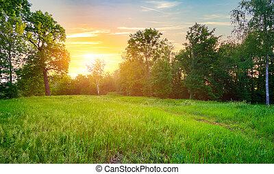 prato verde, erba