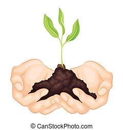 presa a terra, vettore, suolo, illustrazione, crescente, giovane, mani, pianta verde