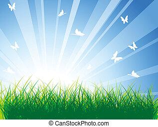 primavera, erba, prato verde
