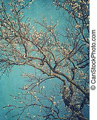primavera, fiori pera