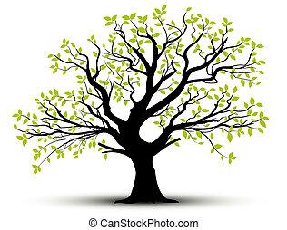 primavera, foglie, vettore, -, albero