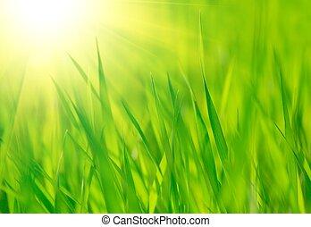 primavera, luminoso, riscaldare, verde, sole, fresco, erba