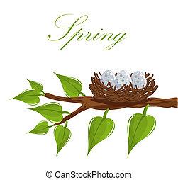 primavera, nido