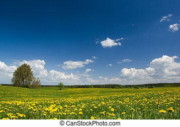 primavera, paesaggio.