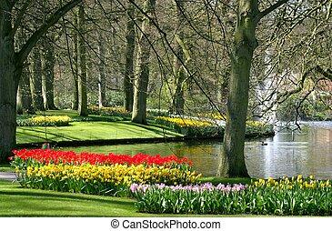 primavera, parco, tempo