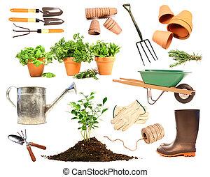 primavera, piantatura, bianco, oggetti, varietà