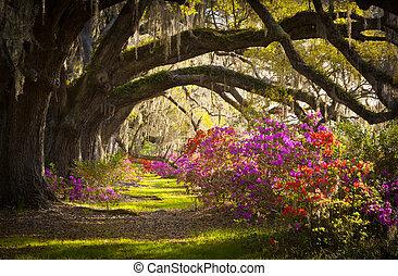 primavera, spagnolo, quercia, albero, piantagione, vivere, azalea, muschio, azzurramento, sc, charleston, fiori, fiori