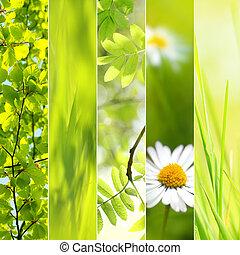 primavera, stagionale, collage