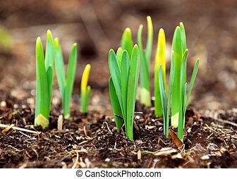 primavera, tiri