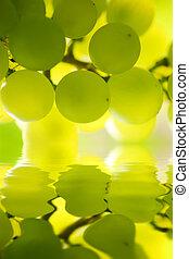 primo piano, dof., vite, poco profondo, vineyard., uva, mazzo