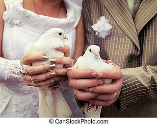 primo piano, mani, sposo, sposa, matrimonio, colombe