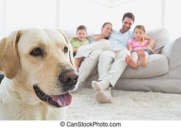 primo piano, vivente, casa, coccolare, divano, loro, stanza, seduta, labrador, famiglia, felice