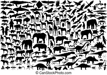 profili, animale