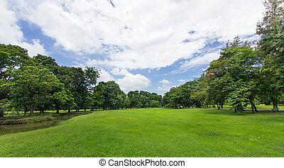 pubblico, cielo blu, albero, parco, prato verde