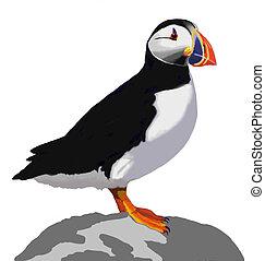 puffin, atlantico