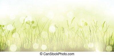 punti, primavera, cielo, erba, bokeh, sfondo verde, luce, blurry