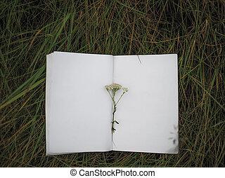 quaderno, erba, fondo, vuoto