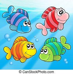 quattro, carino, pesci