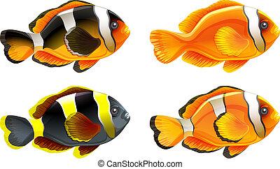 quattro, pesci, colorito