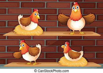 quattro, posizioni, differente, pollo