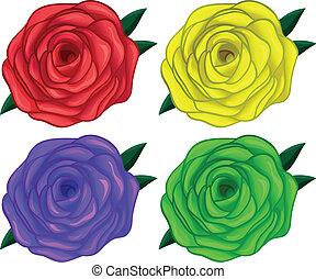 quattro, rose, colorito