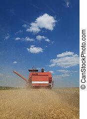 raccogliere, agricoltura, frumento