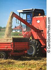 raccolta, trattore, frumento, combinare