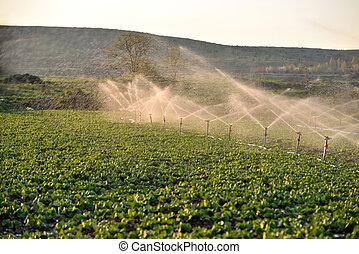 raccolti, campo, irrigazione, spruzzatore