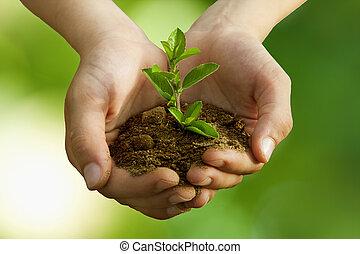 ragazzo, conservazione, albero piantando, ambientale