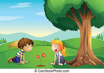 ragazzo, pianta, crescere, ragazza, osservare