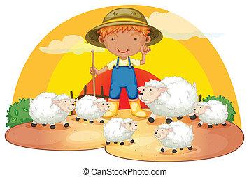 ragazzo, sheeps, suo, giovane