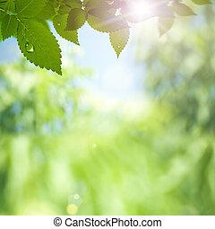 raggi, bellezza, sole, astratto, sfondi, ambientale, bokeh
