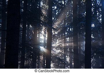 raggi, forrest, luce