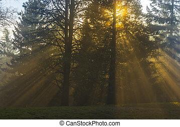 raggi luminosi