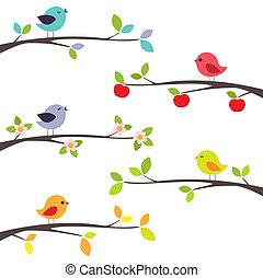 rami, uccelli