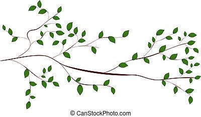 ramo albero