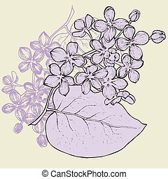 ramo, hand-drawing., vettore, illustration., lilla