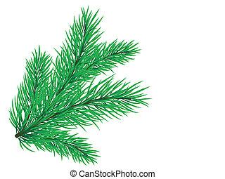ramo, pino
