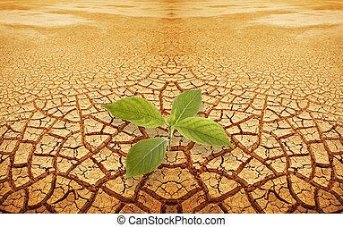 ramoscello, droughty, germoglio, suolo