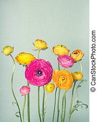 ranunculus, vendemmia, fiore, fondo, colorito