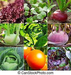 ravanello, insalata, giardino, cavolo rapa, -, set, cavolo, verdura, pomodoro