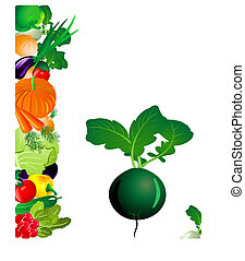 ravanello, verdura