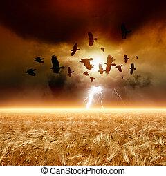 ravens, campo, gregge, volare, frumento