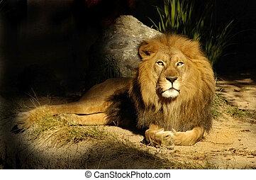re, leone, saggio