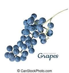 realistico, bianco, vettore, uva
