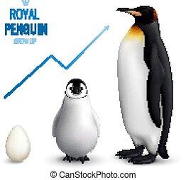 realistico, pinguino, su, crescere
