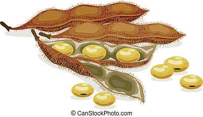 realistico, vettore, soybean., illustration.