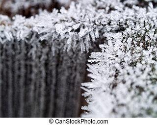 recinto, legno, poco profondo, ghiaccio, mattina, presto, campo, profondità, cristalli