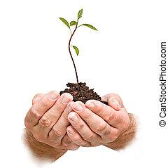 regalo, agricoltura, alberello, mani, avocado